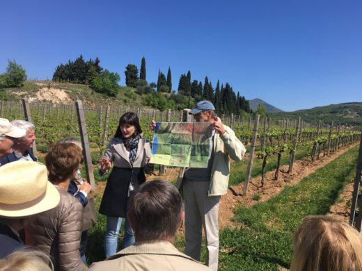 Export manager Martina Margoni på Allegrini visar oss vinfälten La Grola och La Poja i Valpolicella
