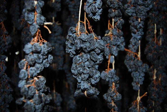 Torkade Corvinadruvor klara för att pressas till underbar Amarone