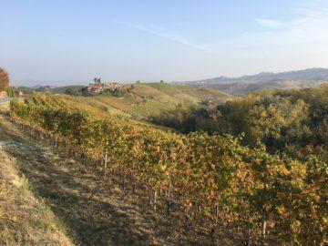 Färdigskördat i Piemonte efter en rekordtidig skörd