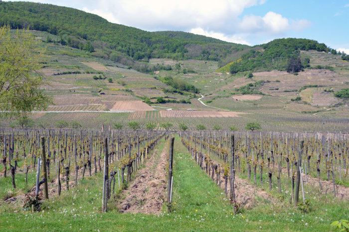 Alsace-Bourgogne (8)