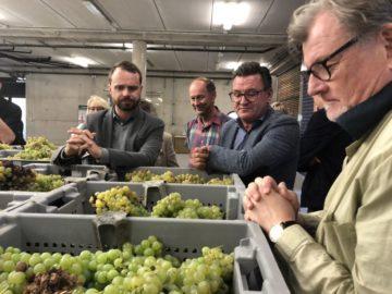 Skörden av den gröna druvan Viura startade i tisdags på BaiGorri i Rioja Alavesa. Min vän Mattias Lange var som vanligt en utmärkt värd