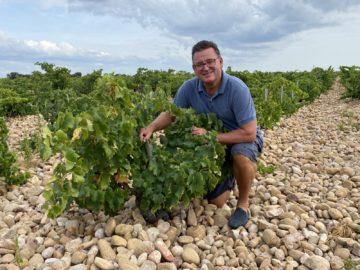Ute bland Grenache-stockar i Chateauneuf-du-Pape med fält täckta av galette-stenar