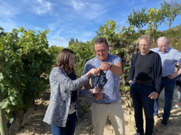 Solmogen tempranillo-klase hos Rémirez de Ganuza i Rioja Alavesa